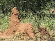 """Howling Dog"" Termite Mound, Ewangan Masai Cultural Village, Mara Masai, Kenya"