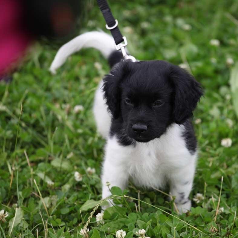 abe tommie fân bûten Ût: tijdens puppy party, tommie 16 juli
