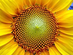 Il Rapporto Aureo: dal Micro al Macro Cosmo verso la Coscienza Globale , Fibonacci (video/articolo)