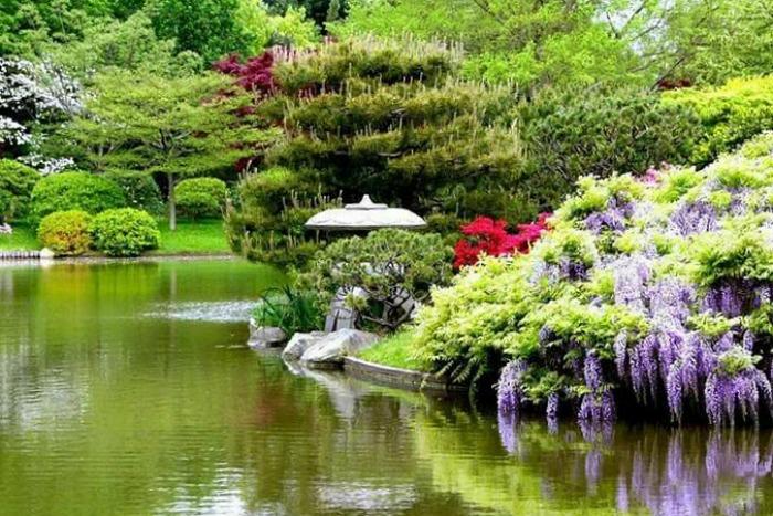 El jard n japon s de la ciudad de buenos aires guia de for Plantas jardin japones