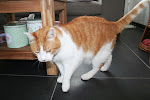 Kees onze kater