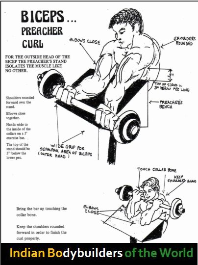 Bicep Exercise Chart See biceps exercise charts