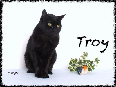 Troy the senior pet in happier days