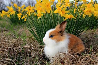 http://1.bp.blogspot.com/-zFMjS3rsIAc/TXzDzyyXl1I/AAAAAAAARDI/9IvCex_gXis/s1600/these_funny_animals_635_640_11.jpg