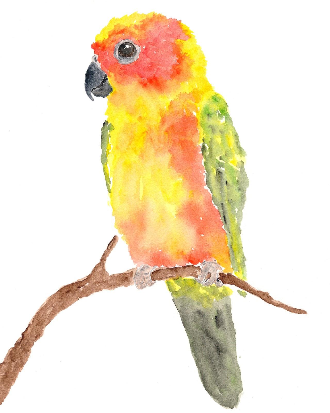 Thimble Sparrow: Watercolor Parrot - Sun Conure Parrot