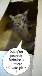 Jolie chatte typée siamoise dans un carton.