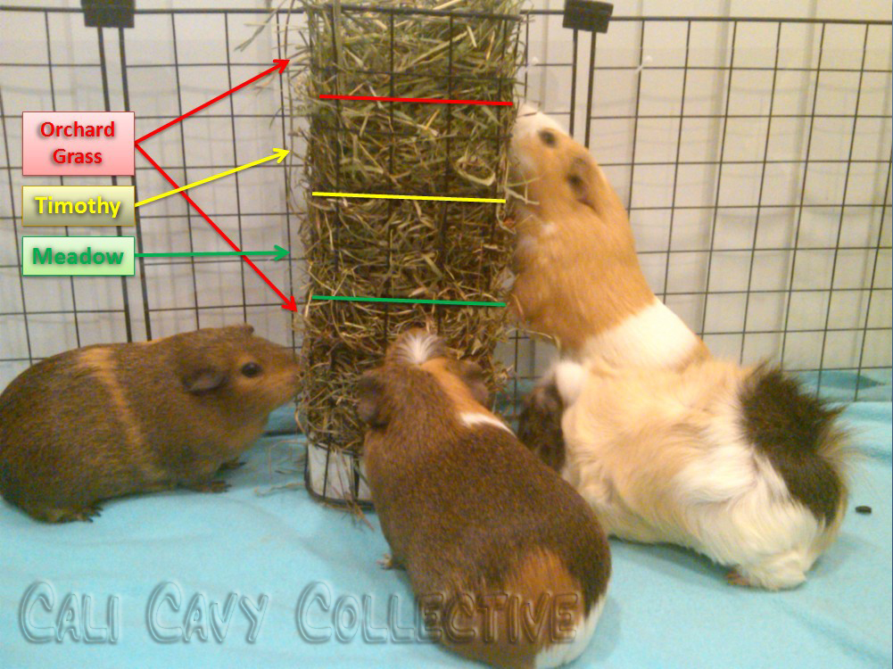 Cali cavy collective a blog about all things guinea pig multi multi flavored hay rack sciox Gallery