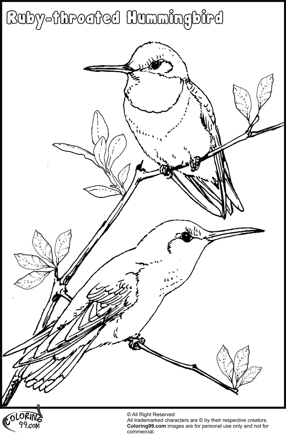 Hummingbird Coloring Pages Team