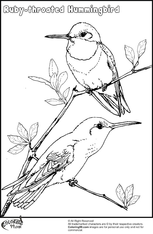 coloring pages of hummingbirds