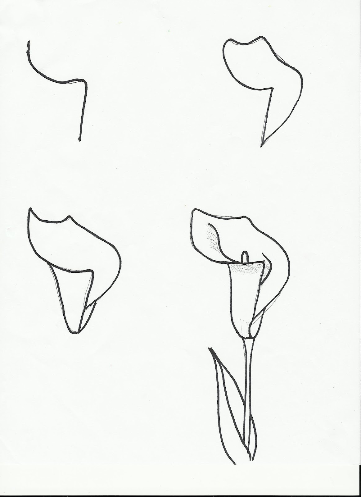 How To Draw An Easter Flower Easter Lily Drawing Tutorial
