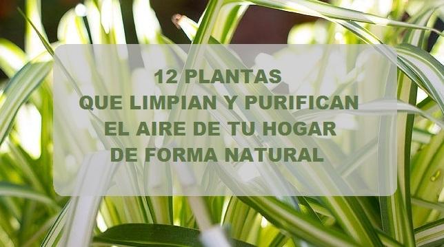 12 plantas que limpian y purifican el aire de tu hogar - Plantas de interior que purifican el aire ...