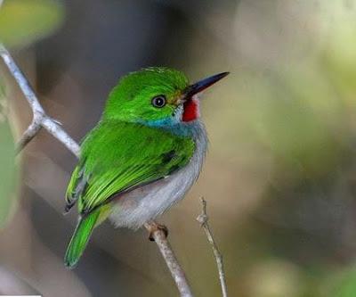 بالصور أصغر الطيور حجما