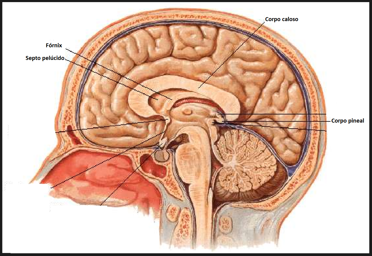 sobotta atlas of human anatomy 15 pdf