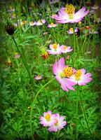 bunga desa