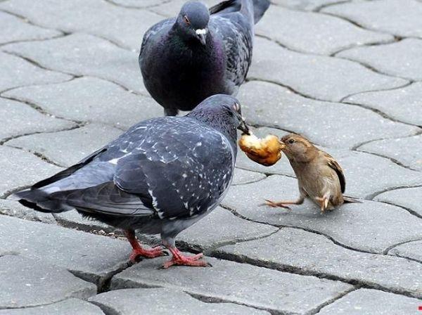 gimana gambar burung merpati nya bagus dan lucu kan apa anda semua ada