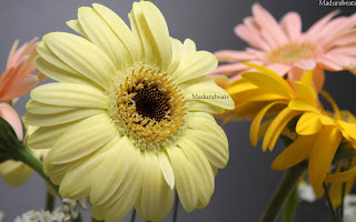 Flower images, Wide screen wallpapers,fresh flowers,Beautiful flowers,Yellow_daisies_hd_wallpaper1