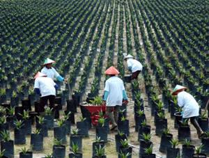Lowongan Kerja PT Sampoerna Agro Tbk Juni 2013
