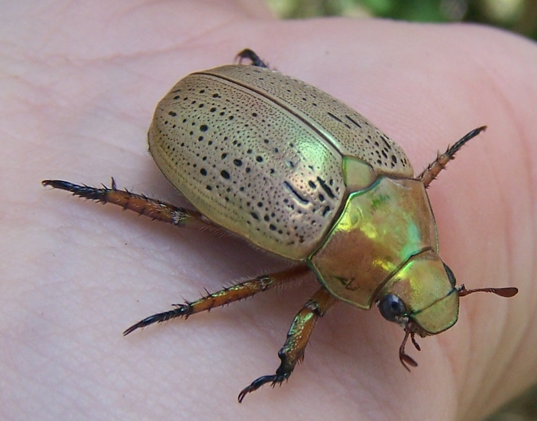Stubby Nubbins - A Labour of Love: Inspired by the Christmas Beetle