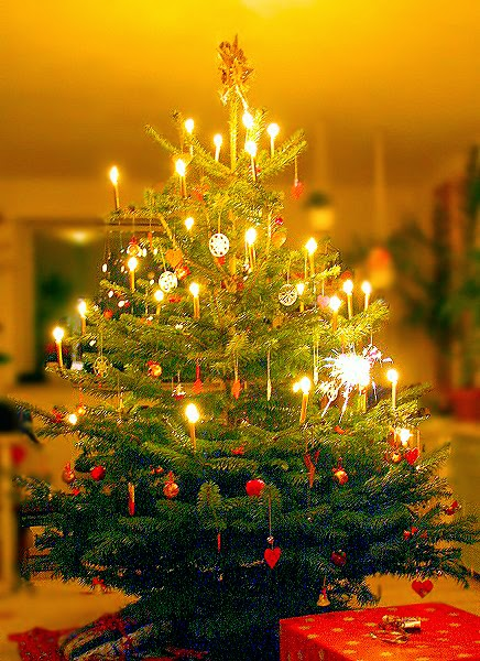 where does the tradition of the christmas tree come from - Where Does The Christmas Tree Come From