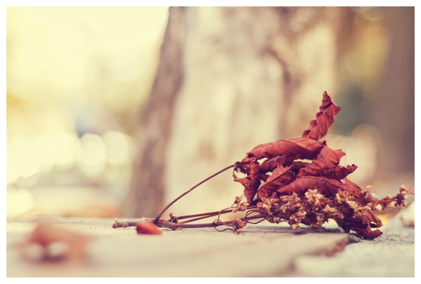 Patat n patat n la naturaleza nos inspira el oto o - Fotos bonitas de otono ...