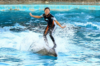 See the Dolphin Show!