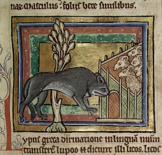 medieval wolf at a fold with an hilarious facial expression