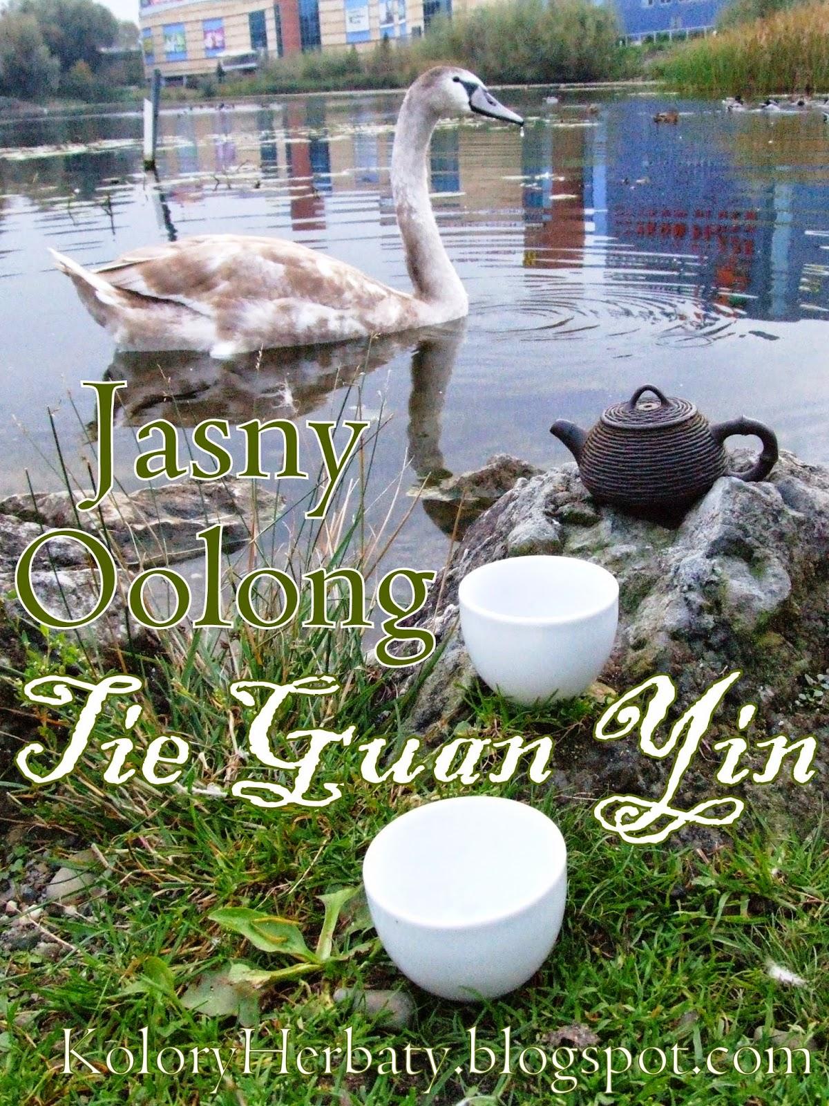 Jasny oolong Tie Guan Yin nad stawem z łabędziami