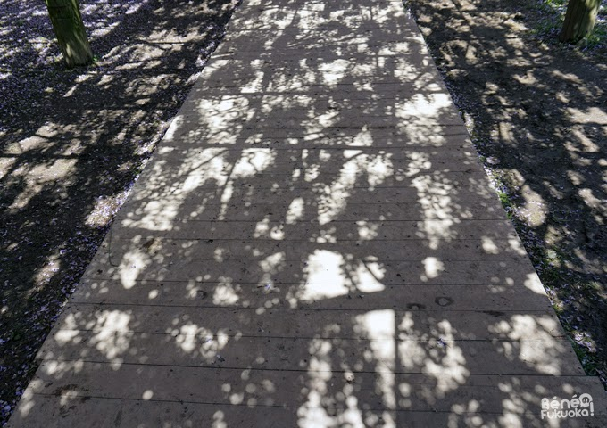 Wisteria's shadows, Kawachi Fuji-en, Fukuoka, Japan
