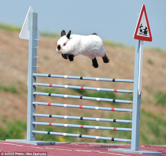 http://1.bp.blogspot.com/-zIIFUNNotNs/Tblf2yC2xQI/AAAAAAAAApg/5NgxnC53PaA/s1600/Rabbit%2Bdressage%2Bset%2Bto%2Btake%2Bthe%2Bworld%2Bby%2Bstorm%2B4.jpg