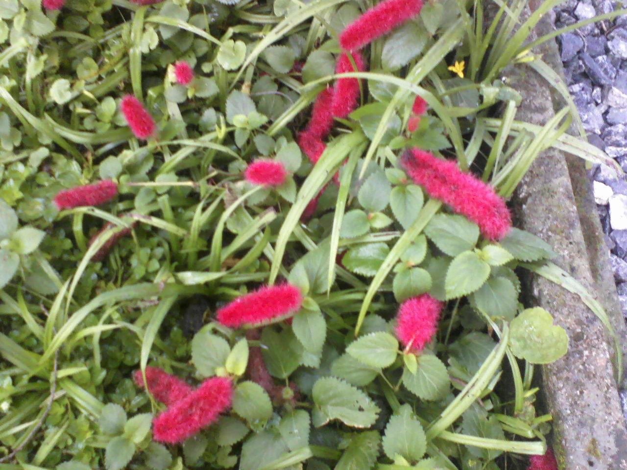 rosas colhidas no jardim do amor: bom e gratificante, oferecer flores colhidas em seu próprio jardim