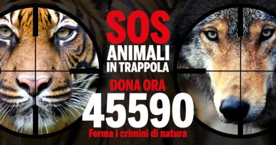 SOS Animali in Trappola:  dona con un sms al 45590 e aiutaci a fermare il bracconaggio!