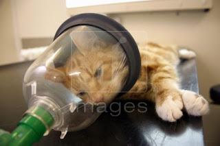 Liêu pháp gây mê trên chó mèo.