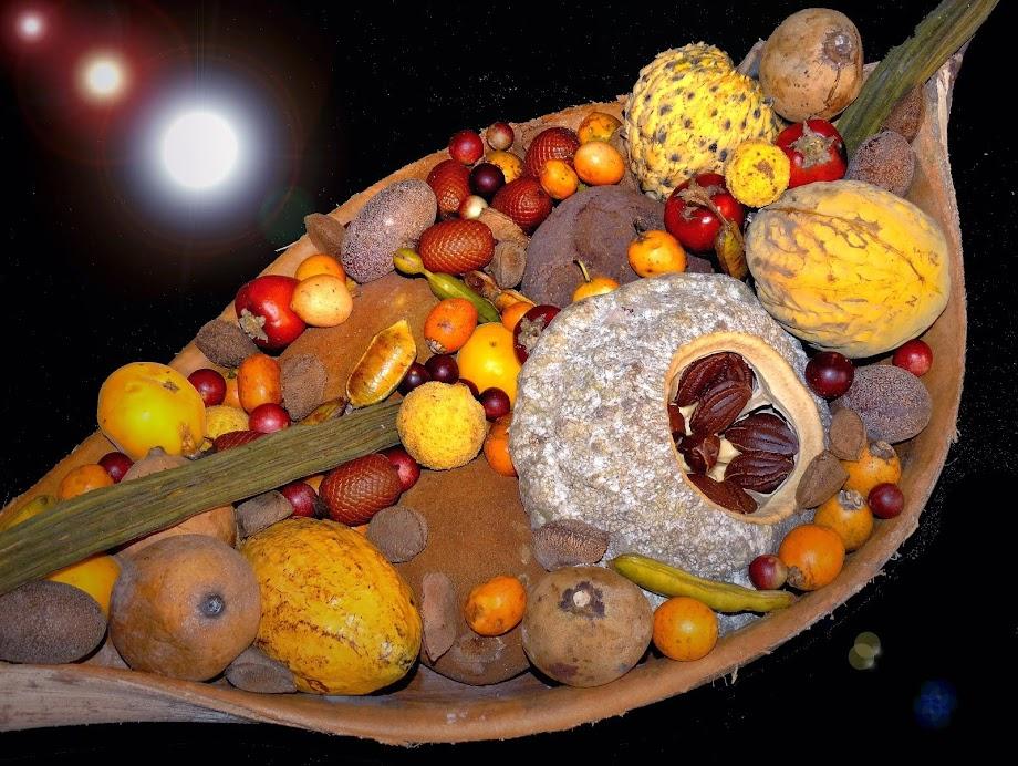 Frutos nativos da Amazônia.