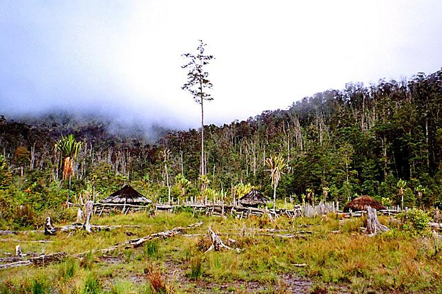 Imag-8_paisaje-natural-campo-melanesia