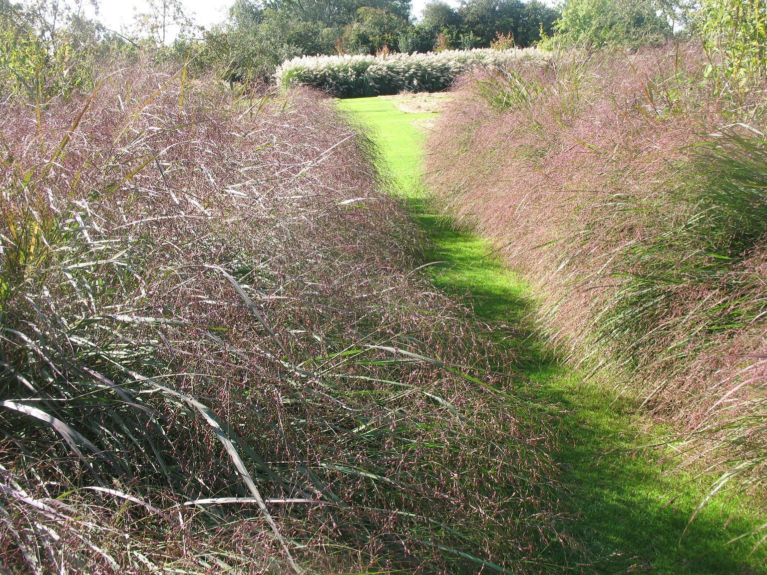 Le blog de parcs et jardins de l 39 oise le jardin plume for Le jardin l experience