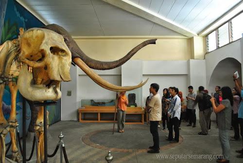 Gajah purba museum ranggawarsita