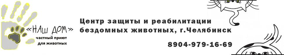 """Собаки, кошки, щенки, котята даром в добрые руки, приют """"Наш дом"""", Челябинск"""