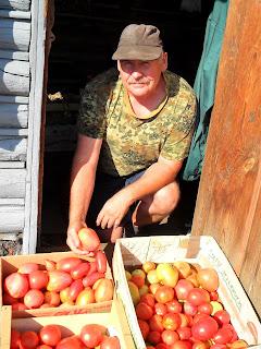 помидорки для переоаботки