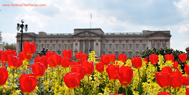 Buckingham Palace and Tulips
