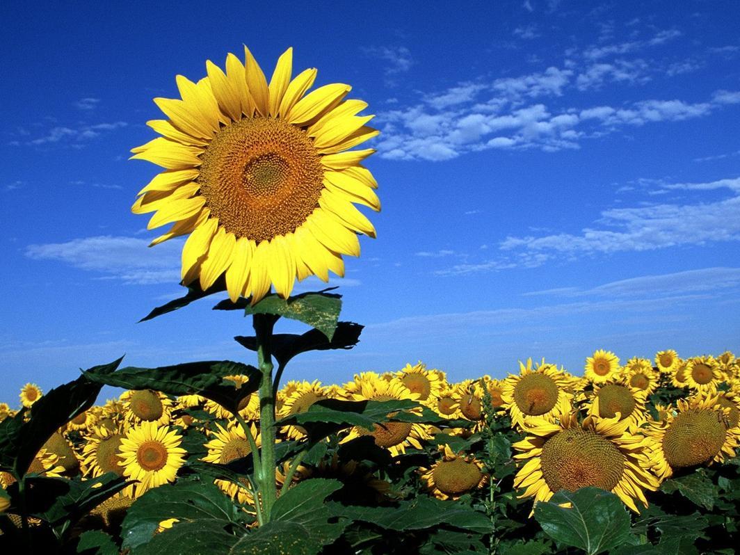 Im  Genes De Flores Y Plantas