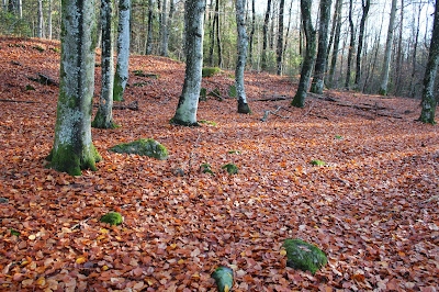 Høstskog