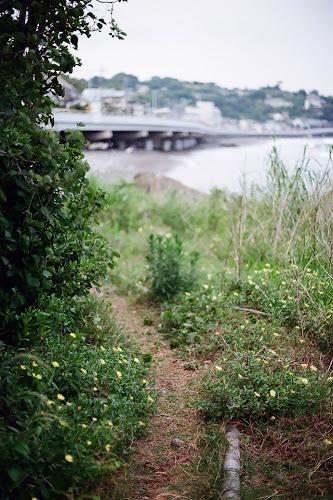 Path to the Beach by Lono_Luno