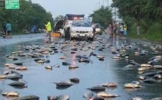 Permalink to Fenomena Langka Hujan Ikan Melanda India