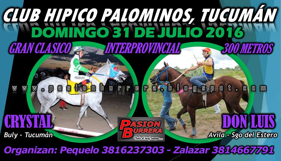PALOMINOS - 31 - 300