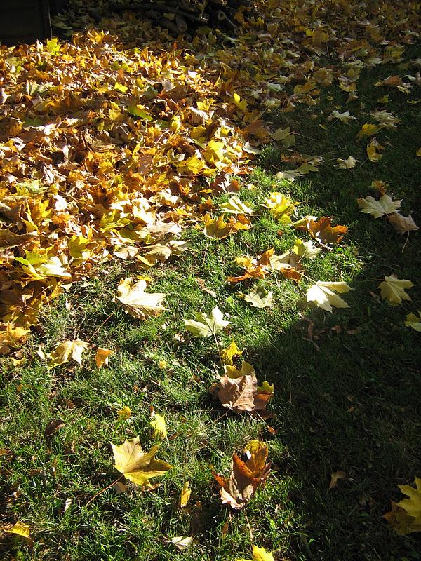 les feuilles maudites