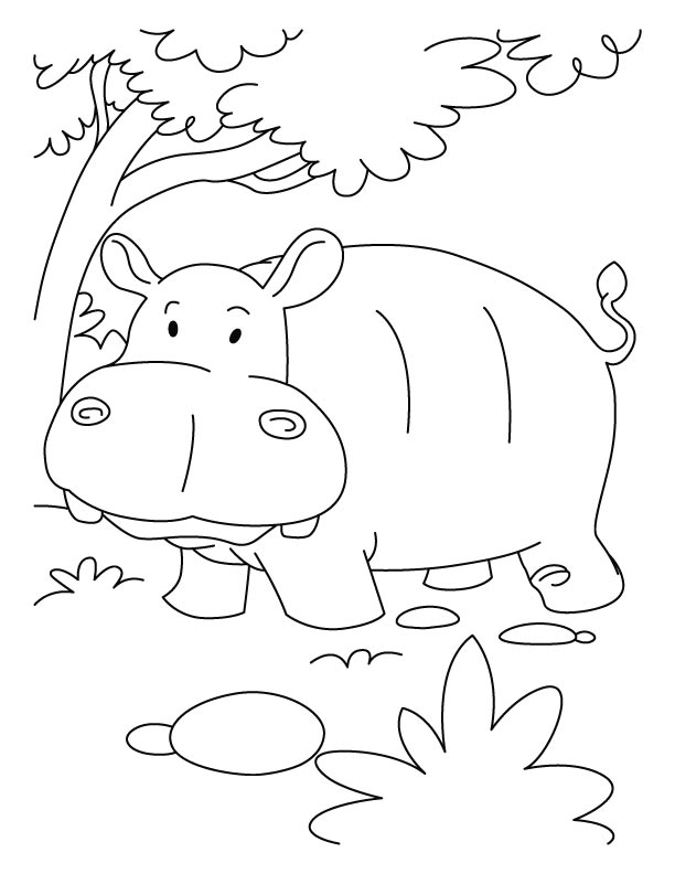 Hippo Coloring Sheet Coloring Coloring Pages