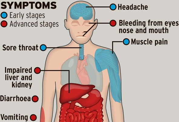 What are the symptoms of low blood platelets?