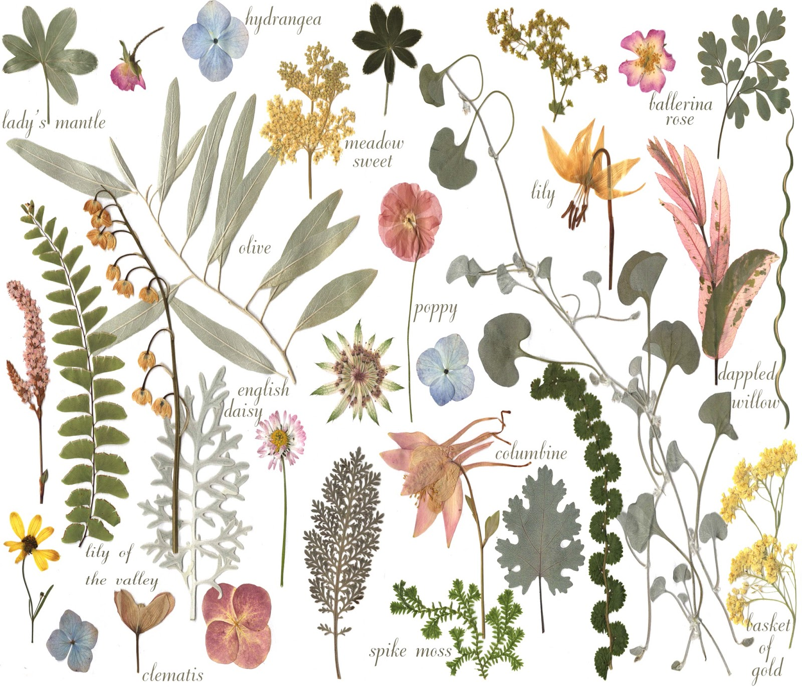 My Petal Press Garden Blog: Botanical Sketchbook art on fabric