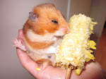RIP Nessie the Hamster