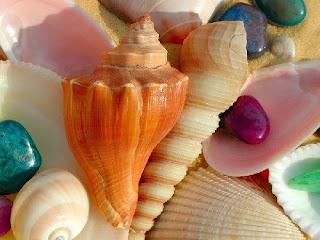 conchas de mar y piedras de colores